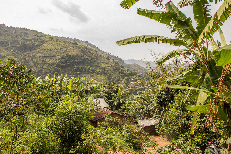 congo coffee DRC