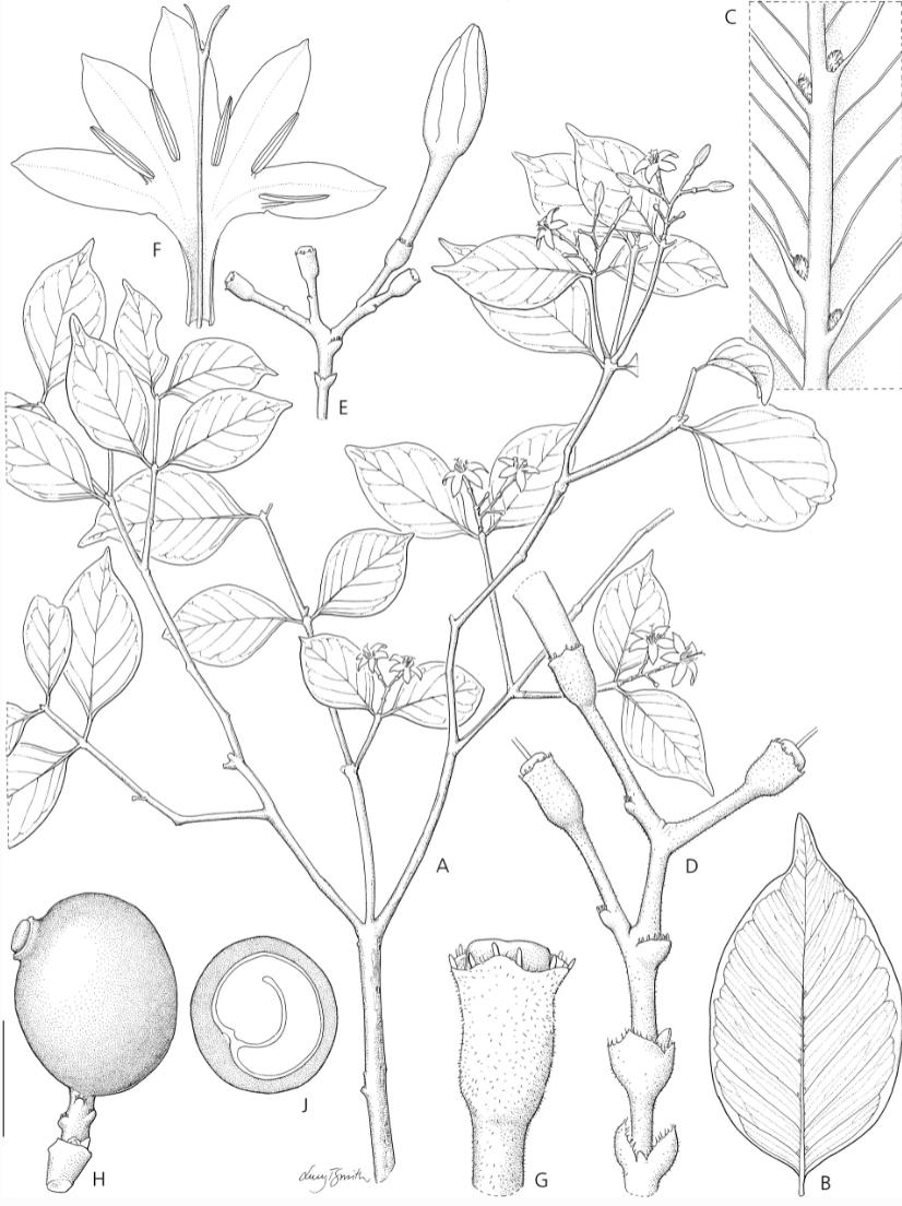 six new coffee species 2